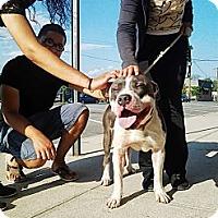 Adopt A Pet :: Moses - Brooklyn, NY