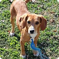 Adopt A Pet :: Candy - Raleigh, NC