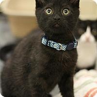 Adopt A Pet :: Harvard - Sacramento, CA