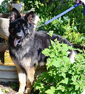 Dog Training In Michigan City Indiana