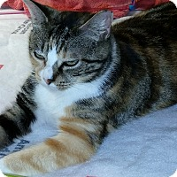 Adopt A Pet :: Mackenzie - Forest Hills, NY