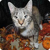 Adopt A Pet :: Giselle - Ortonville, MI