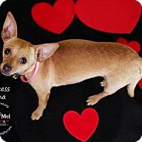 Adopt A Pet :: Princess Tiana - Shawnee Mission, KS