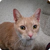 Adopt A Pet :: Gryffin - Columbus, OH