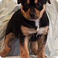 Adopt A Pet :: Mauve - Waldorf, MD