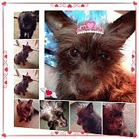 Adopt A Pet :: Robin - S. Pasedena, FL