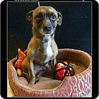 Adopt A Pet :: LA - Phoenix, AZ