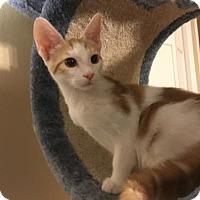 Adopt A Pet :: Tommie - Hammond, LA