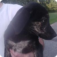 Adopt A Pet :: Brook - Kendall, NY