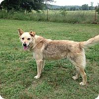Adopt A Pet :: Wiley Coyote - E. Greenwhich, RI