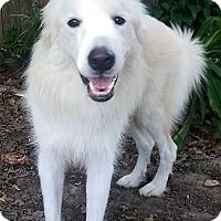Adopt A Pet :: Luna - Kyle, TX