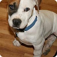 Adopt A Pet :: Baffin - Waterbury, CT