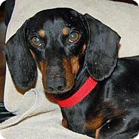 Adopt A Pet :: Doc in TN - Columbia, TN