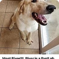 Adopt A Pet :: River - Valparaiso, IN