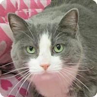 Adopt A Pet :: Impatient - Woodstock, IL