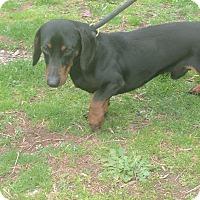 Adopt A Pet :: Happy - Washington, DC