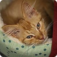Adopt A Pet :: Patrick - Alexandria, VA
