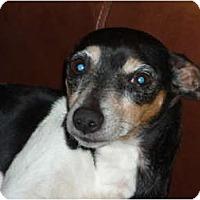 Adopt A Pet :: Roscoe - Pointblank, TX