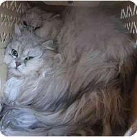 Adopt A Pet :: Jay & Silent Bob - Davis, CA