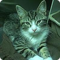 Adopt A Pet :: Ellen DeGeneres - Richboro, PA