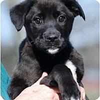 Adopt A Pet :: Casey - Providence, RI