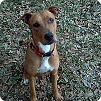 Adopt A Pet :: Mina - loxahatchee, FL