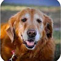 Adopt A Pet :: Della - Scottsdale, AZ