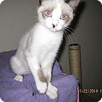 Adopt A Pet :: Ana - La Jolla, CA