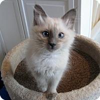 Adopt A Pet :: Baby Taylor - Columbus, OH