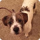 Adopt A Pet :: Dylan
