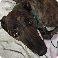 Adopt A Pet :: Reagan - Swanzey, NH