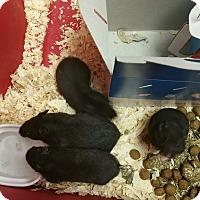 Adopt A Pet :: Ariel, Blair, Casey, Dana, Ell - Ogden, UT