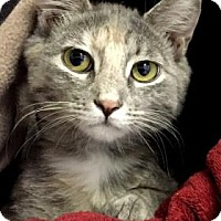 Adopt A Pet :: Cheri - Fort Collins, CO
