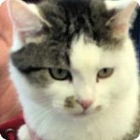 Adopt A Pet :: Lynn - Fairborn, OH