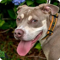 Adopt A Pet :: Pacey - Savannah, GA
