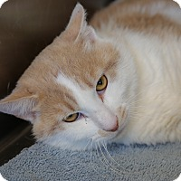 Adopt A Pet :: Puffy - Sierra Vista, AZ