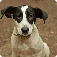 Adopt A Pet :: Marty - San Antonio, TX