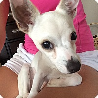 Adopt A Pet :: Elsa - San Antonio, TX