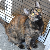 Adopt A Pet :: Dedra - Michigan City, IN