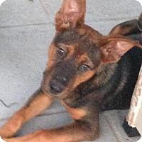 Adopt A Pet :: Rosie - Leesville, SC