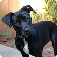 Adopt A Pet :: Hilda - Los Angeles, CA