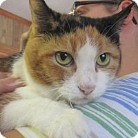 Adopt A Pet :: Itty Bit - Reeds Spring, MO