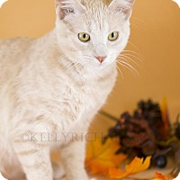 Adopt A Pet :: Ember - Oviedo, FL