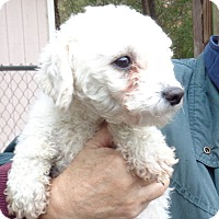 Adopt A Pet :: Charo - Crump, TN