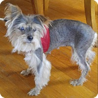 Adopt A Pet :: Sue - Matthews, NC