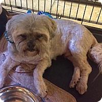 Adopt A Pet :: Max - Boca Raton, FL