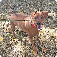 Adopt A Pet :: Spike - Boca Raton, FL