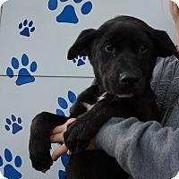 Adopt A Pet :: Jazz - Oviedo, FL
