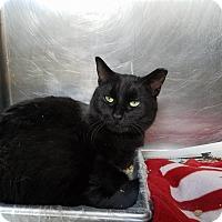 Adopt A Pet :: Sage - Windsor, VA