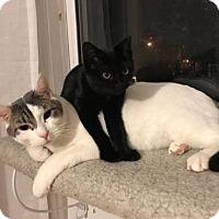 Adopt A Pet :: Kroger - Wakefield, MA